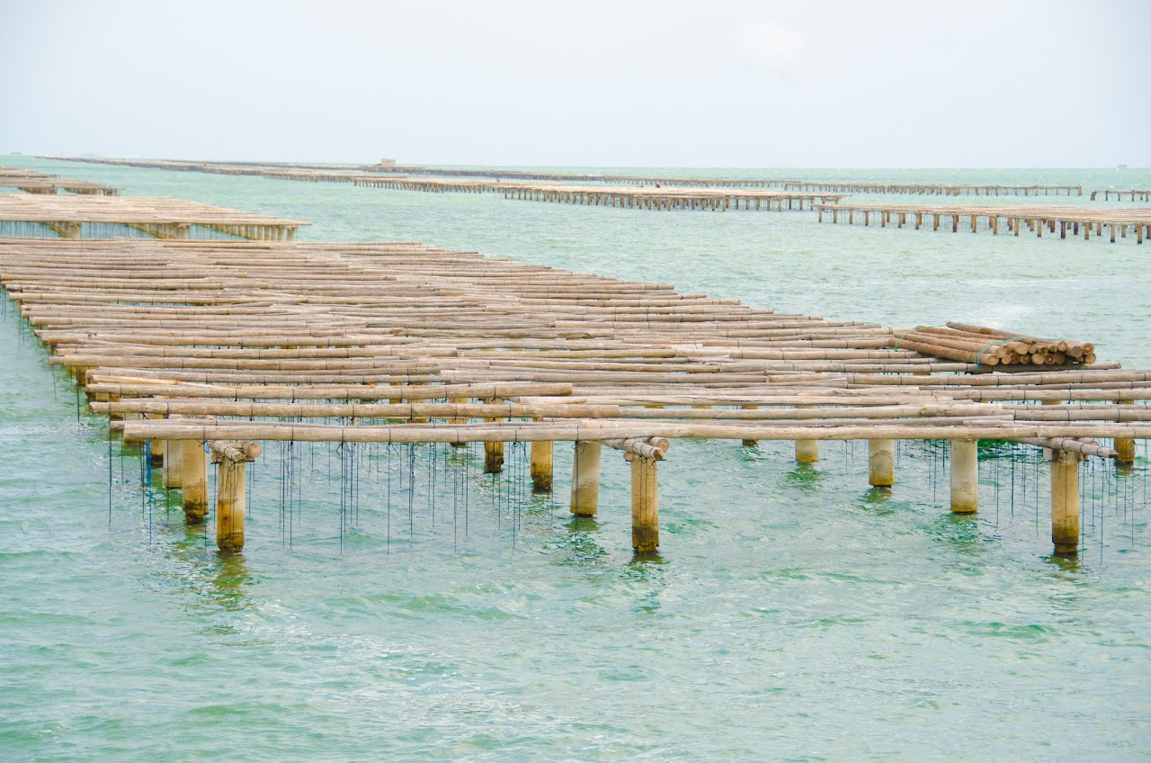 Mussel beds at Delta de l'Ebre