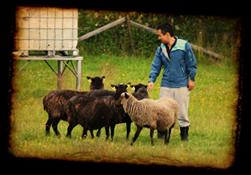 Christian och fåren