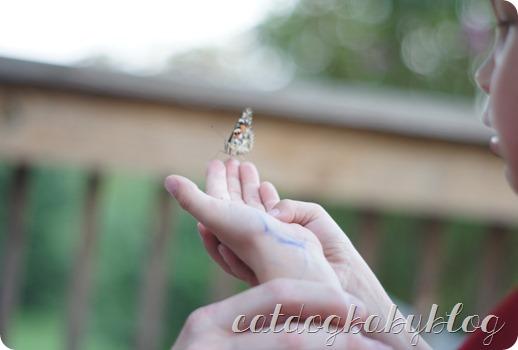 2013-09-11 butterfly (30)