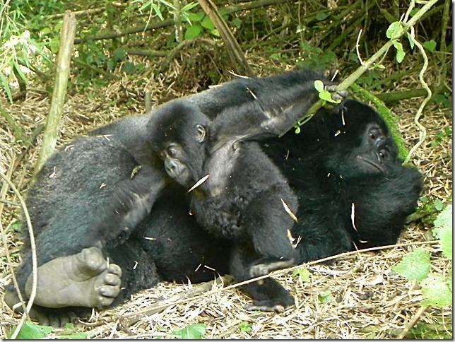 Rwanda_Gorillas (10)
