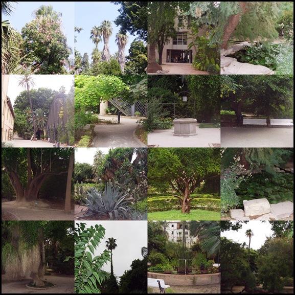 52 - El Jardin botanico