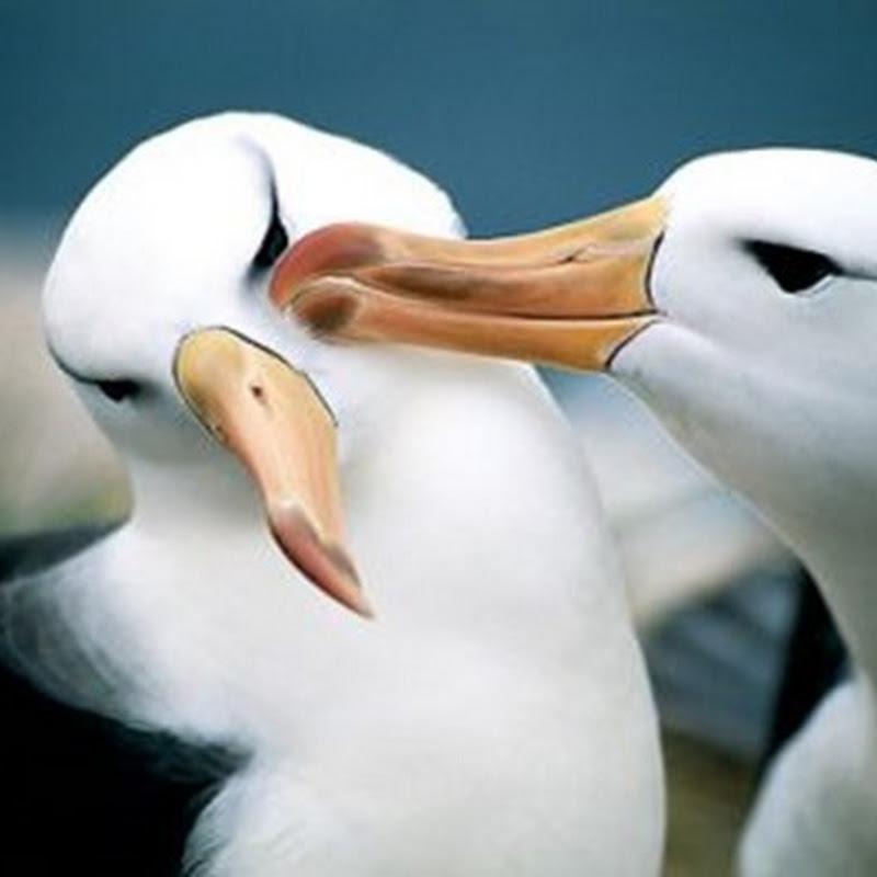 Una de cada 8 especies de aves en peligro de extinción