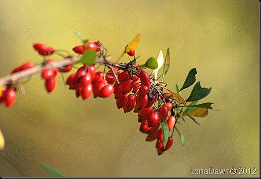 CF_Autumn_Berries3