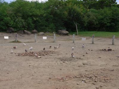 と、突然鳩の集団が舞い降りて来て