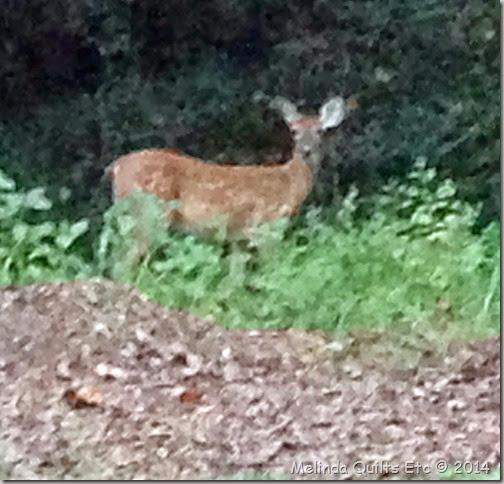 0914 Deer