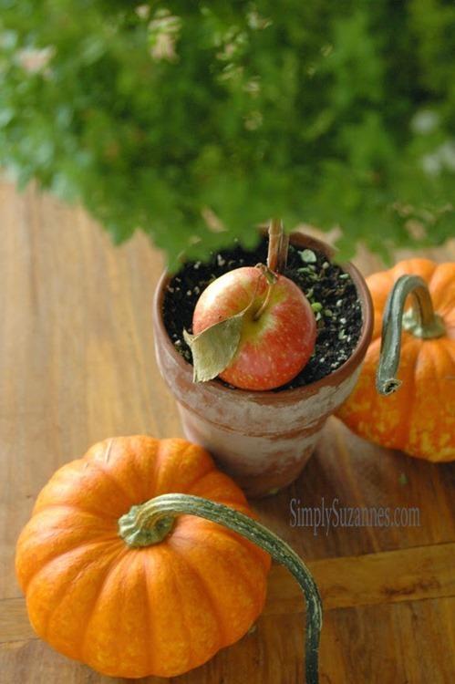 apples and pumpkins 2-2
