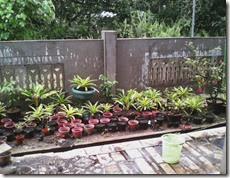 tampilan tanaman di halaman sekarang