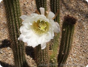 Arizona2012 028