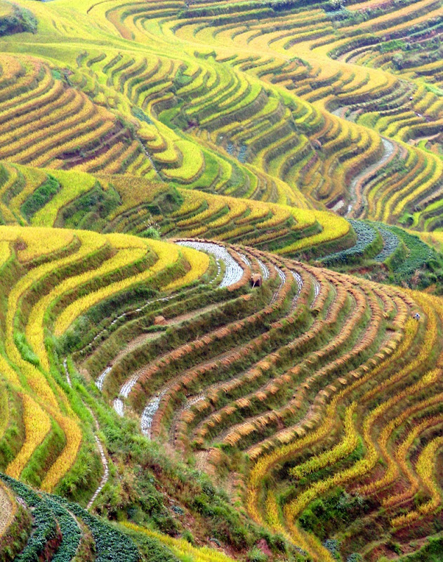 rice-terraces-6