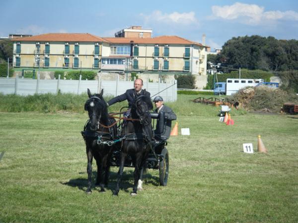 giostra dei cavalli 079.jpg
