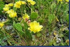 cactus 2011-06-10 003