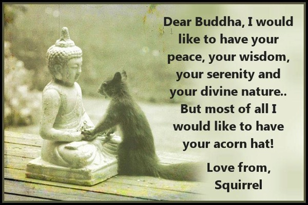 OriginalSquirrelBuddha