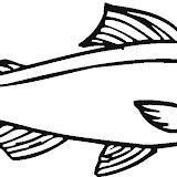 salmon-12-coloring-page.jpg