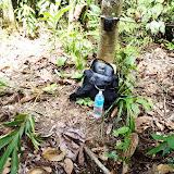 樹の幹に取り付けられたカメラトラップ/ Camera trap is attached to a tree