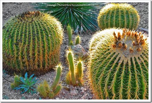 131203_TucsonBotanicalGarden_189