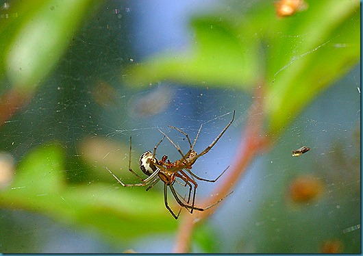 hämähäkit 050