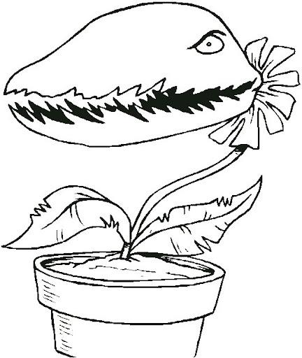 colorear plantas carnivoras