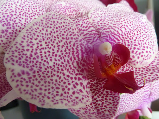 Orchids are so striking.