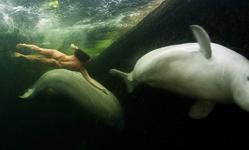 """A russa concluiu que """"'as baleias sentem a energia do ser humano, percebem bloqueios no fluxo de energia e tratam de corrigir isso. """"Elas mudam as pessoas"""" / Viktor Lyagushkin"""
