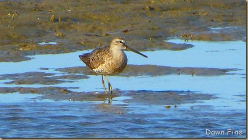 tern island birding_038