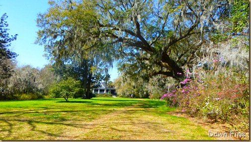 Magnolia Plantation_082
