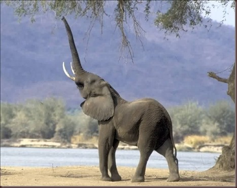Amazing Animals Pictures Elephant (3)