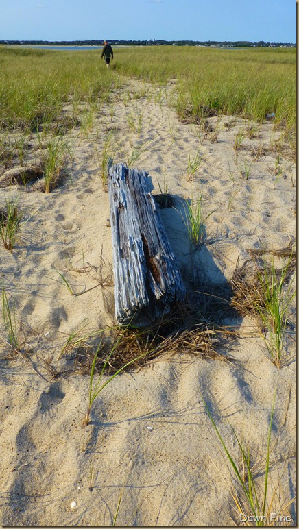 cape cod_012