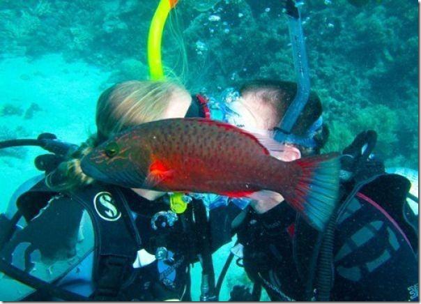 Senhor peixe ensina como estragar um momento romântico