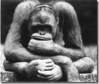 monos piensan blogdeimagenes (14)