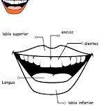Partes del cuerpo: boca