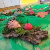 Kindergartenjahr 2014/2015 » Herbst