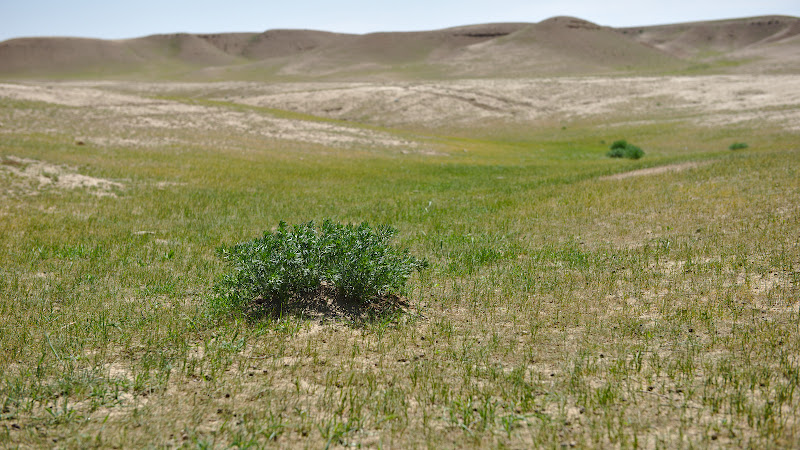 Unde e un smoc de iarba pot fi si pastori.