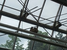 2014.04.21-051 paresseux