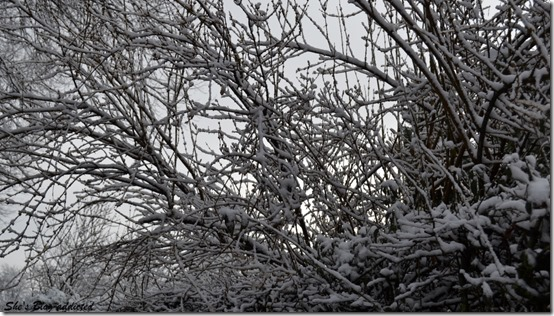 Winter2015 (75)