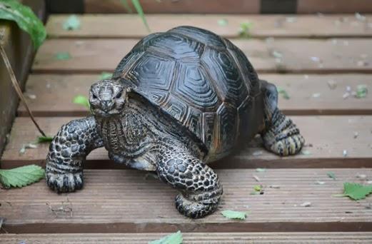Pet tortoise garden statue