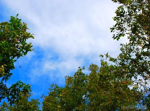 1.sky thru the trees-kab