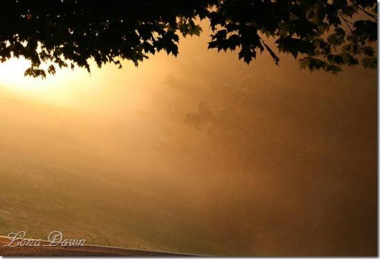 Sunrise_Fog_2011