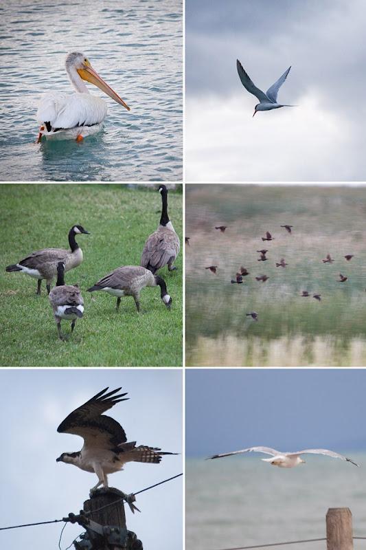 2012-07 birdwatching2