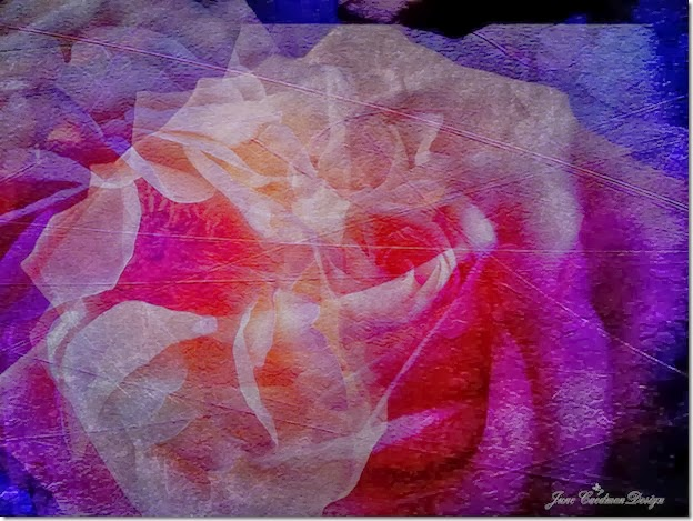 Yellow_Rose_Abstract3