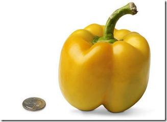 18-bell-pepper[1]