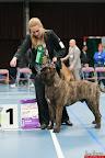20130511-BMCN-Bullmastiff-Championship-Clubmatch-2113.jpg