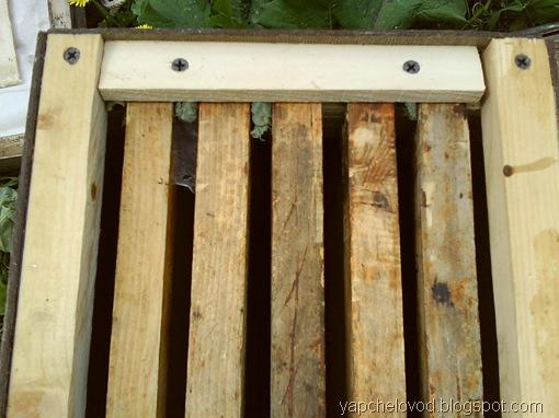 Пчелы-листорезы в ловушке для медоносных пчел