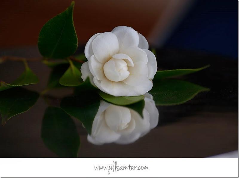 flower_5282