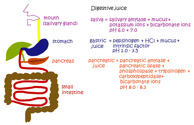 Types of digestive juices