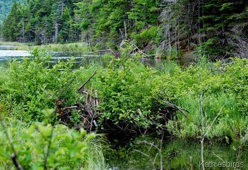 10. beaver dam-kab