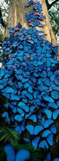 4fa3f1a7c76b7-489_decoracao-tendencia-azul-escuro-04
