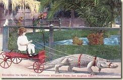 10-16-alligator-farm