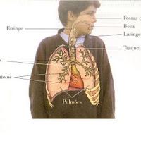 pulmoes.jpg