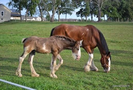 Baby & Mom