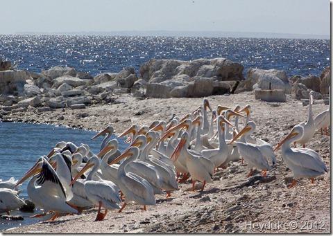 Salton Sea CA 031